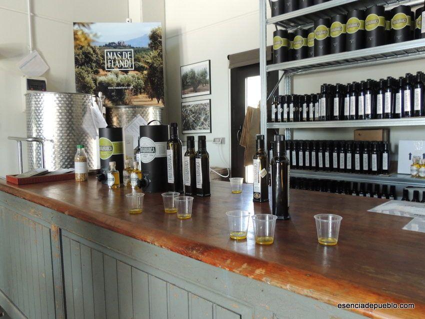 Cata de aceite de oliva del Bajo Aragón