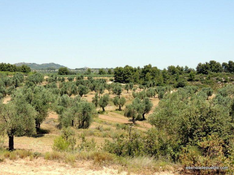 Conociendo el aceite de oliva Mas de Flandi