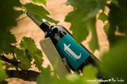 Comprar vino tinto joven del Mas de Torubio en el Matarraña