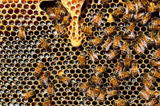 Propiedades de la miel natural de abeja