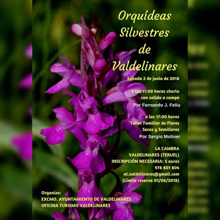 orquideas silvestres valdelinares