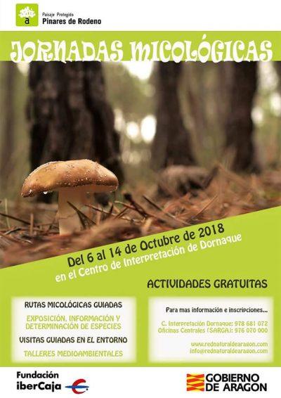 Jornadas Micológicas Pinares del Rodeno @ Albarracín | Aragón | España