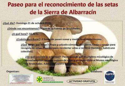 Paseo para el reconocimiento de las setas de la Sierra de Albarracín @ Bronchales | Aragón | España