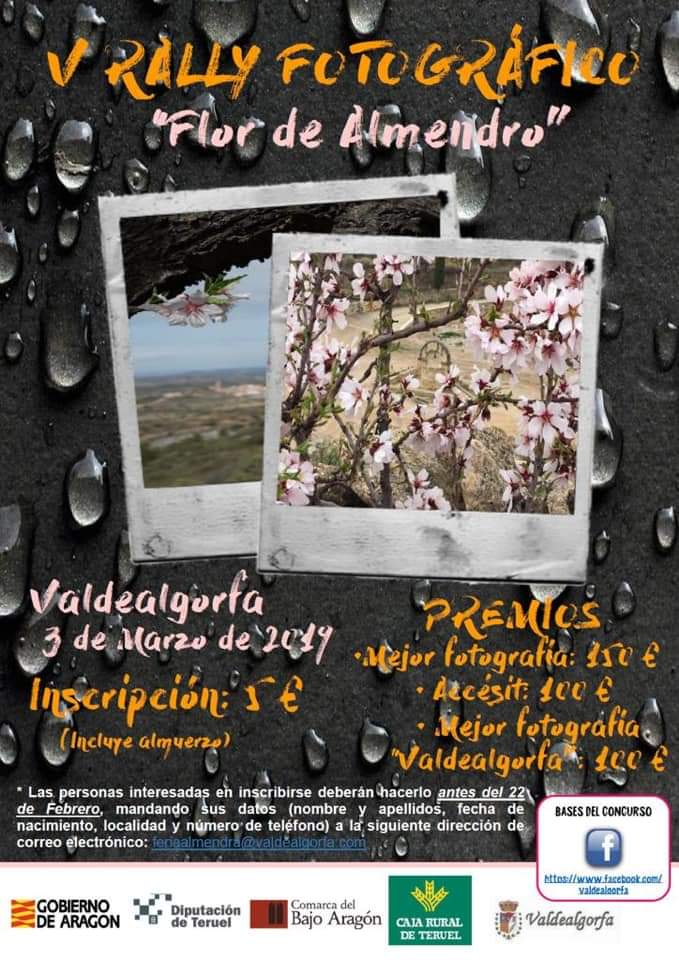 rally fotografico flor de almendro valdealgorfa 2019